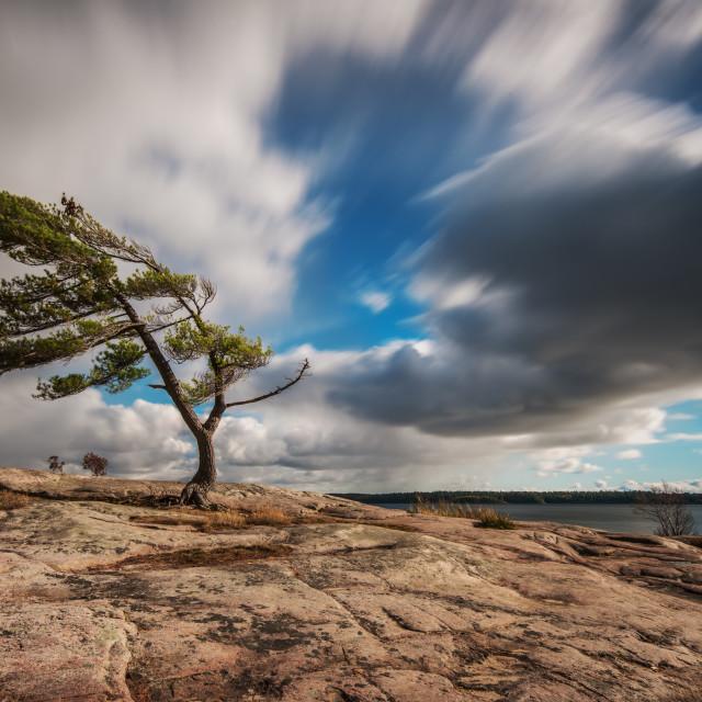 """Lone Pine Tree at Killbear Provincial Park"" stock image"