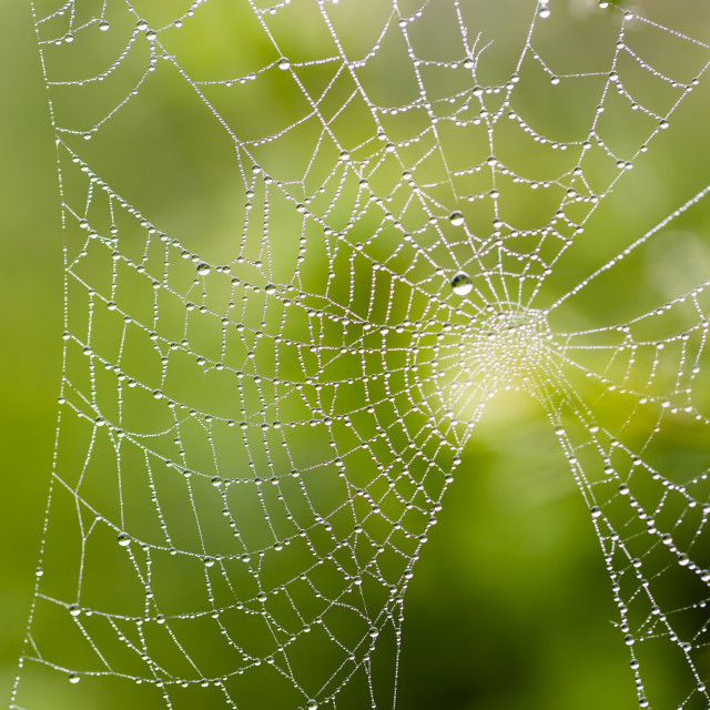 """""""Water drops on spider web needles extreme macro crop"""" stock image"""