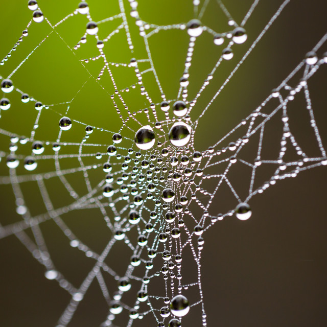 """Water drops on spider web needles extreme macro crop"" stock image"