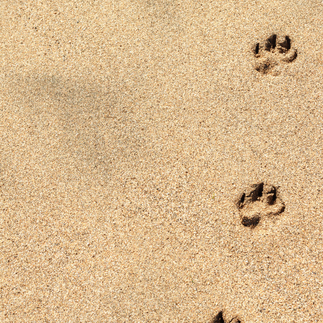 """Paw prints"" stock image"