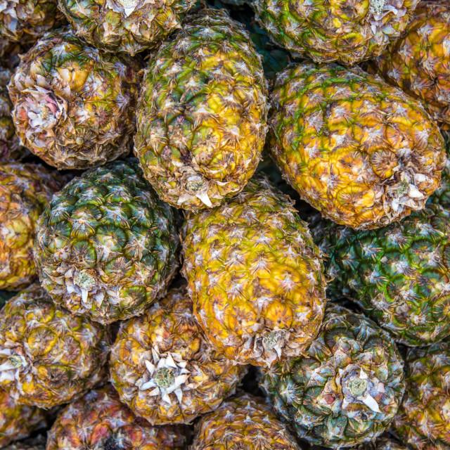 """""""pineapple plantation fruit exotic"""" stock image"""