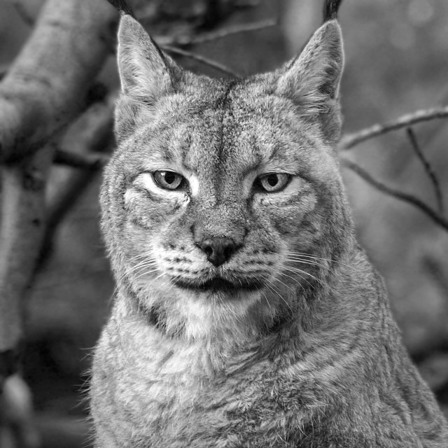 """The Lynx Effect"" stock image"