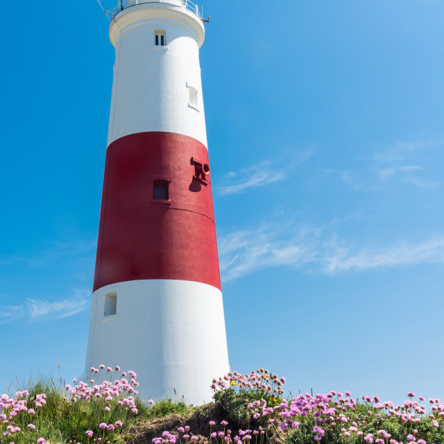 """Portland Bill Lighthouse and sea pinks 1"" stock image"