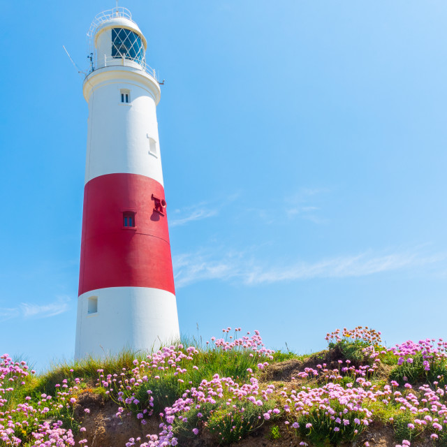 """Portland Bill Lighthouse and sea pinks 2"" stock image"