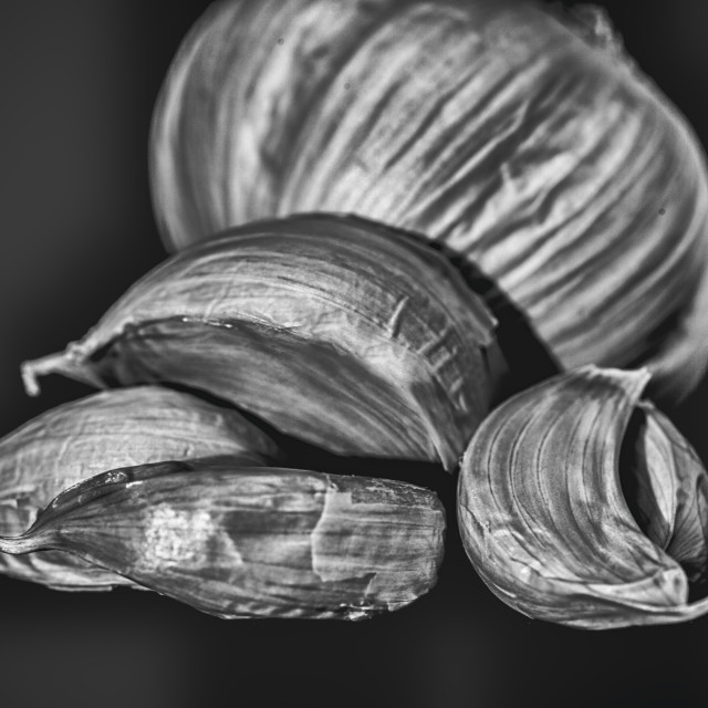 """Garlic BW"" stock image"