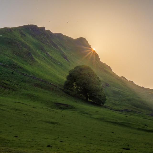 """Chrome Hill Sunstar"" stock image"