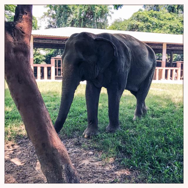 """Cute Elephant"" stock image"