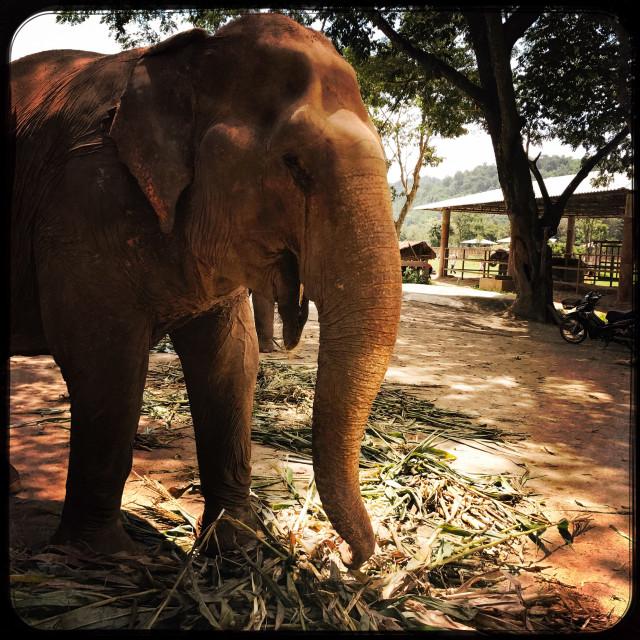 """Filter Elephant"" stock image"