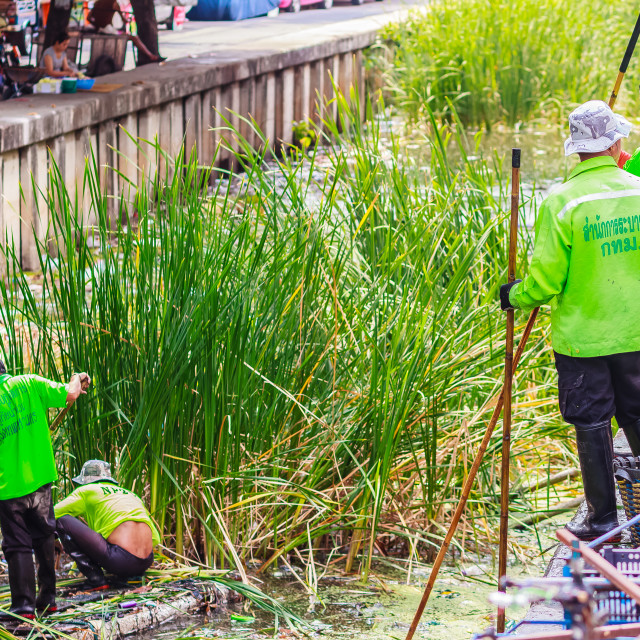 """Bangkok municipal staff in canal dredging work to dump vegetation trash to..."" stock image"