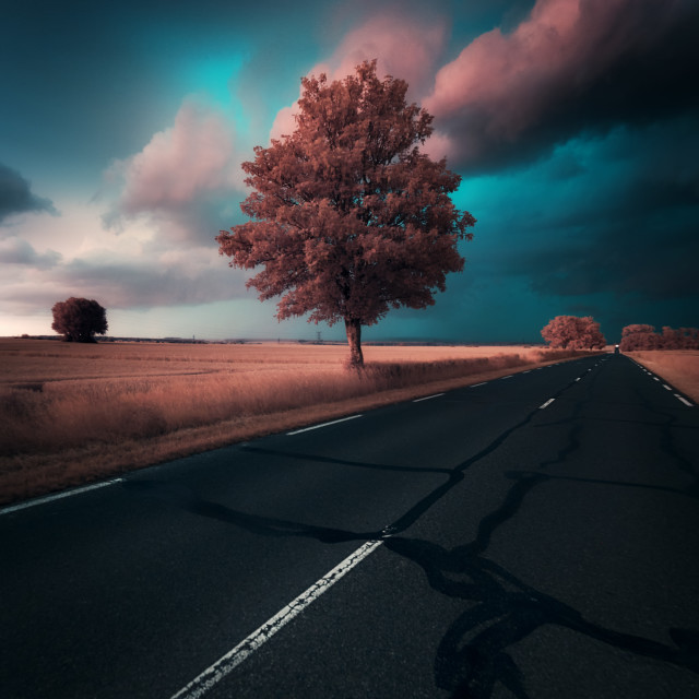 """""""Tree by a stormy night"""" stock image"""