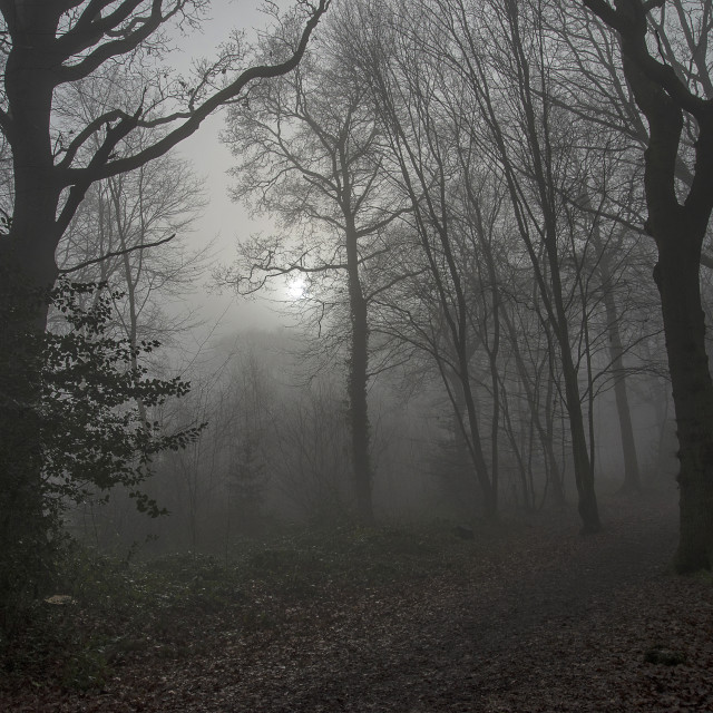 """Foggy Woodland"" stock image"