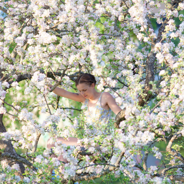 """Woman in Apple blossom"" stock image"