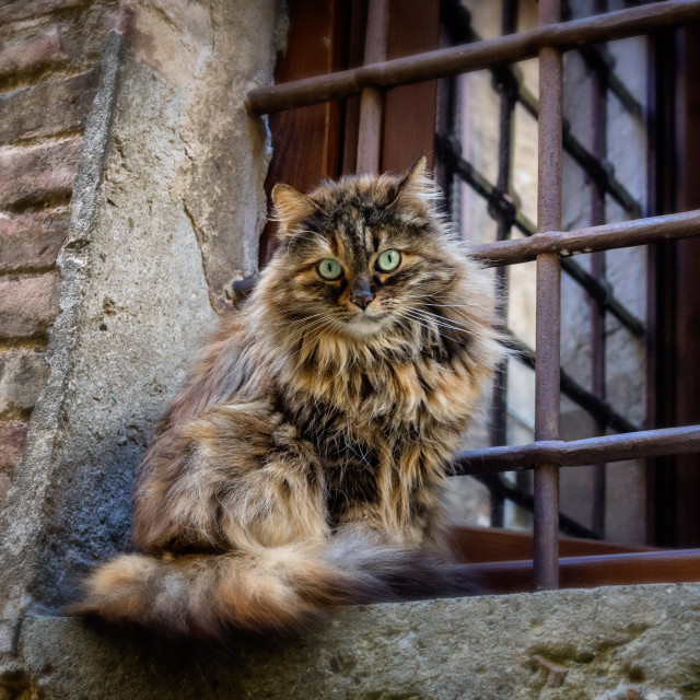 """Lazy cat on a wall in Montepulciano, Tuscany"" stock image"