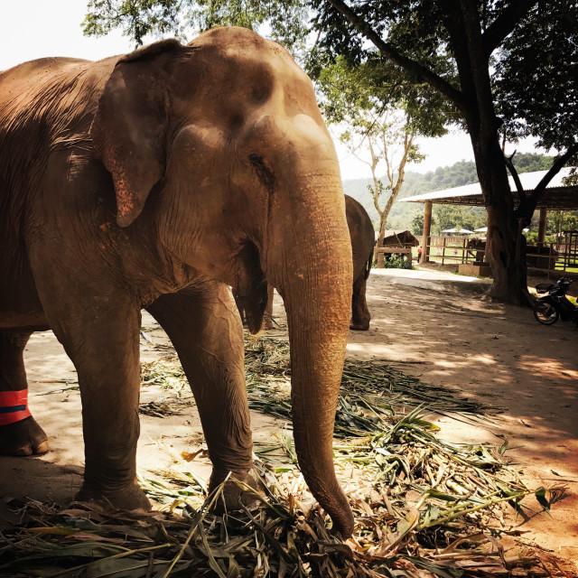 """""""Elephant Nature Park"""" stock image"""