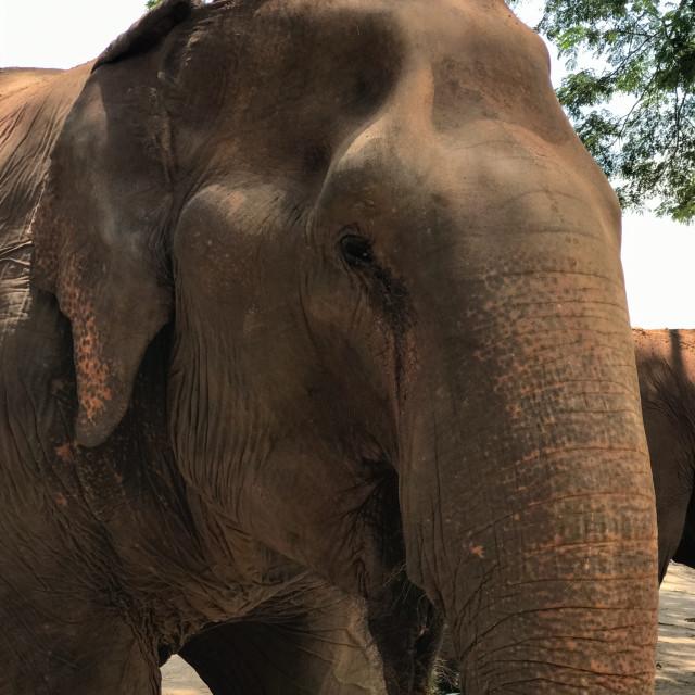 """""""Elephant Up Close"""" stock image"""