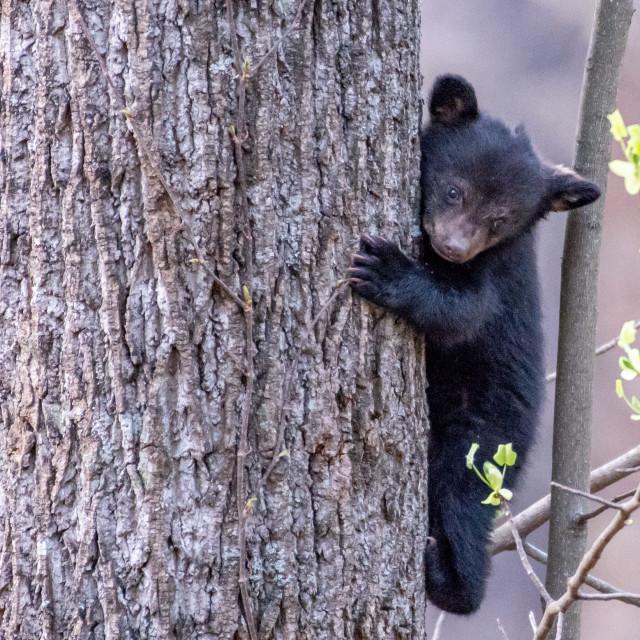 """""""Tiny Bear on Tree Trunk"""" stock image"""