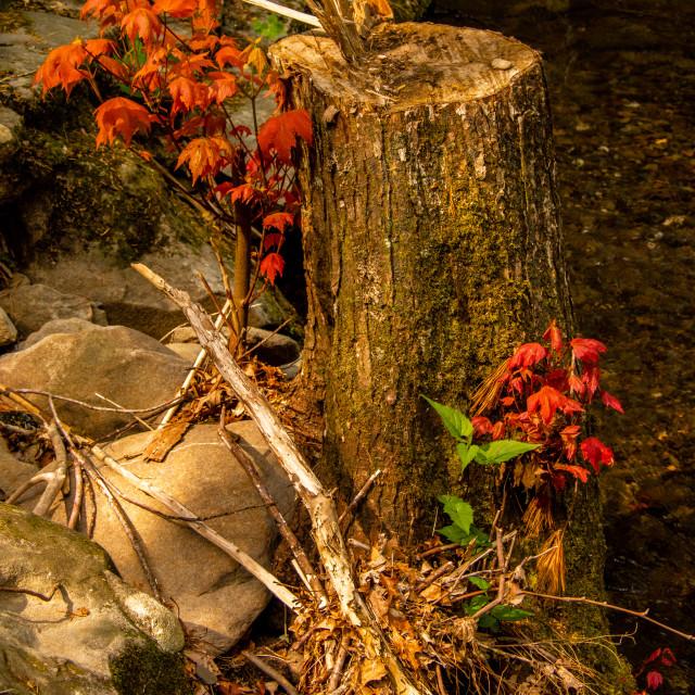 """""""Colorful Woodland Scene"""" stock image"""