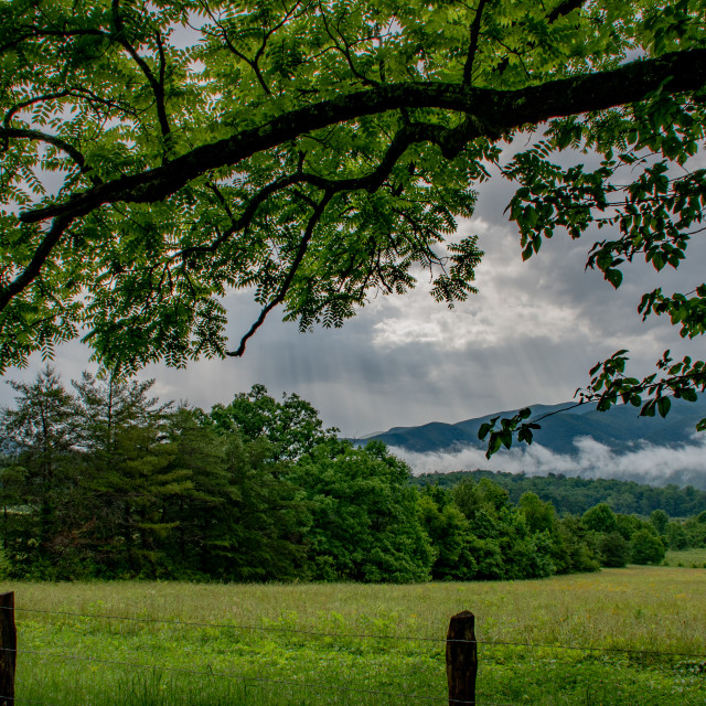 """Smoky Mountain against Foreground Tree"" stock image"