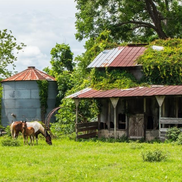 """Old farm"" stock image"