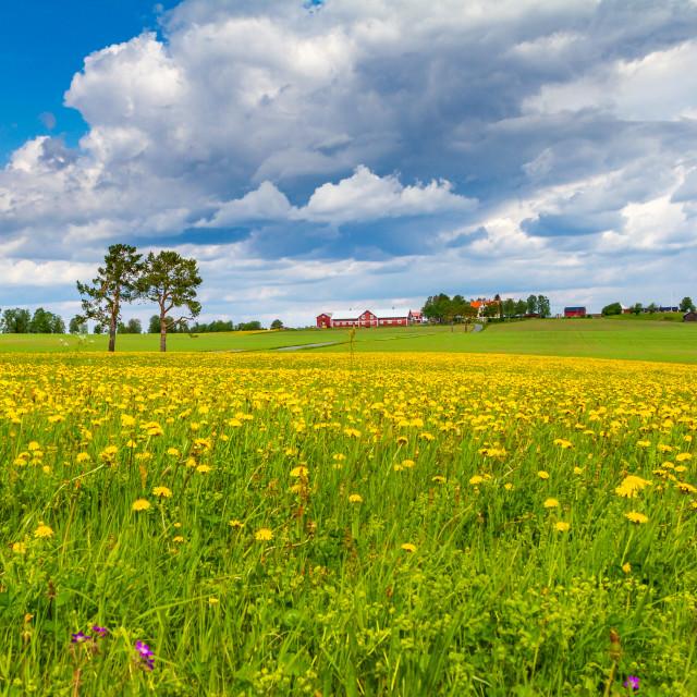 """Spring in Sweden"" stock image"