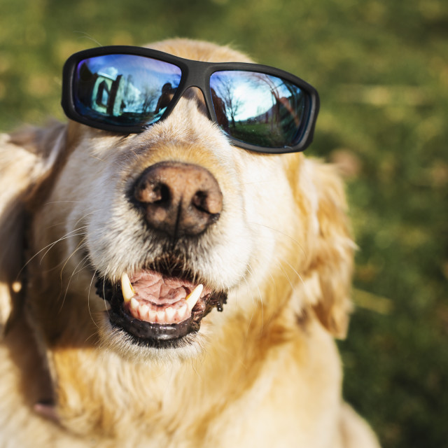 """Happy Dog in Glasses"" stock image"