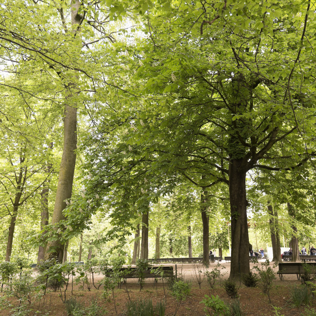 """""""Park with people strolling in Brussels capital of Belgium."""" stock image"""