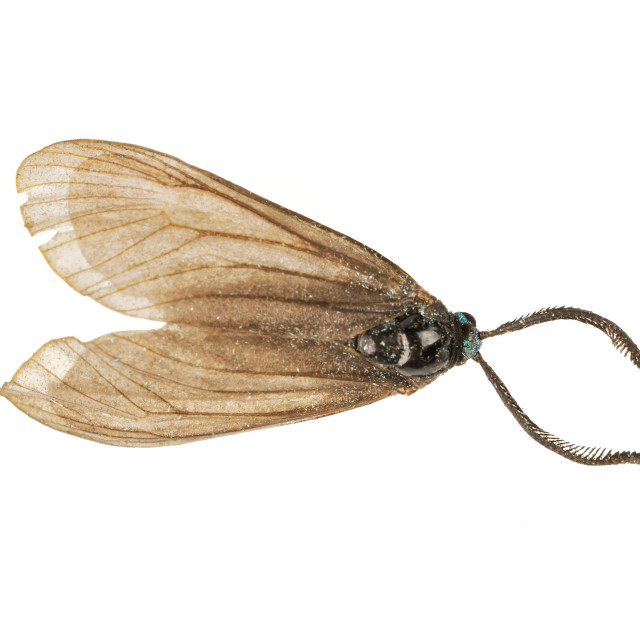 """""""Brown moth on a white background"""" stock image"""