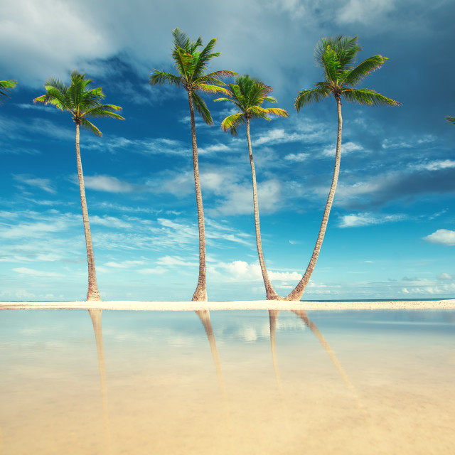 """""""Coconut Palm trees on white sandy beach in Punta Cana, Dominican"""" stock image"""