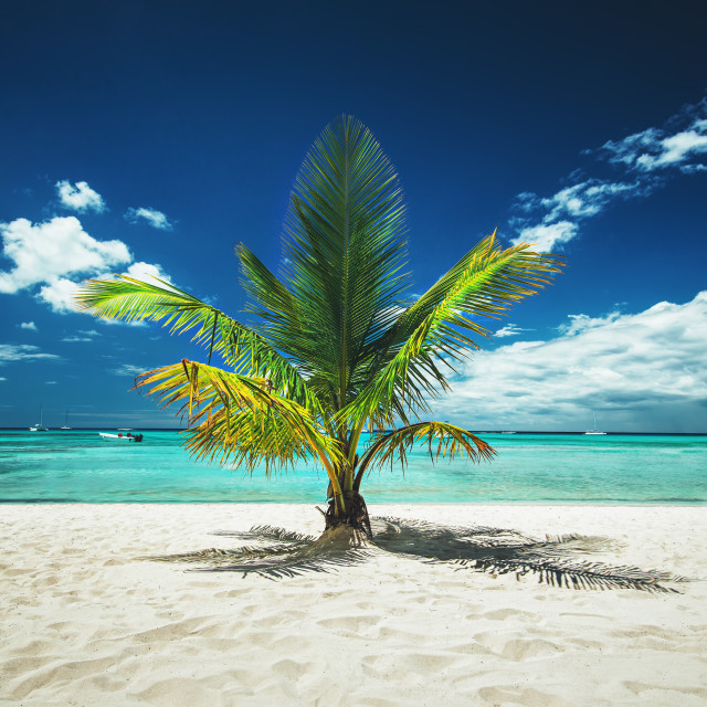 """Palmtree and tropical beach"" stock image"