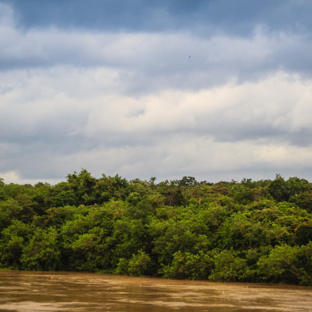 """""""Beautiful full muddy water of Mun river with green forest and blue sky in the..."""" stock image"""
