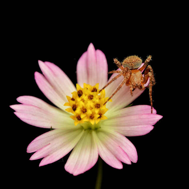 """""""Spider and flower"""" stock image"""