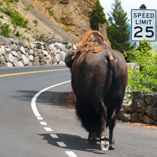 """Speed Limit 25"" stock image"