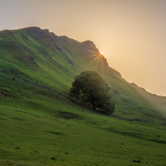 """Chrome Hill Sunstar"" stock image"