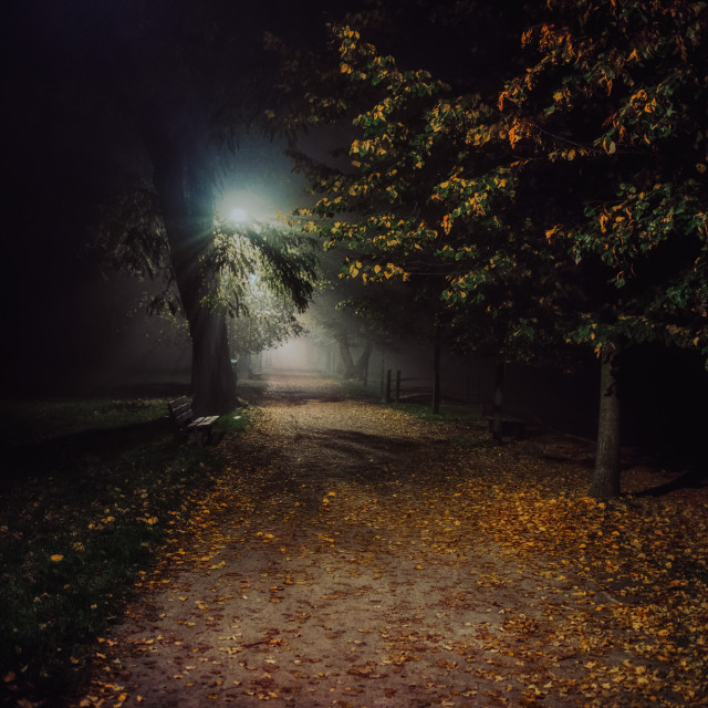 """fog in the park, night, soft focus, high iso"" stock image"