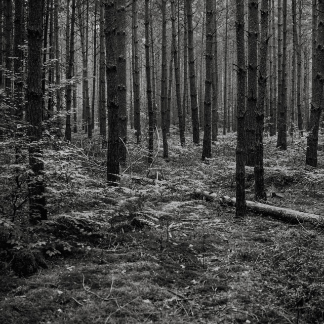 """in the middle of the forest, natural background, black and white"" stock image"