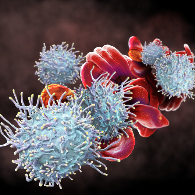 """RBCs and activated T lymphocytes, SEM"" stock image"