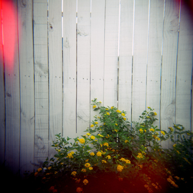 """""""Flowers against fence"""" stock image"""