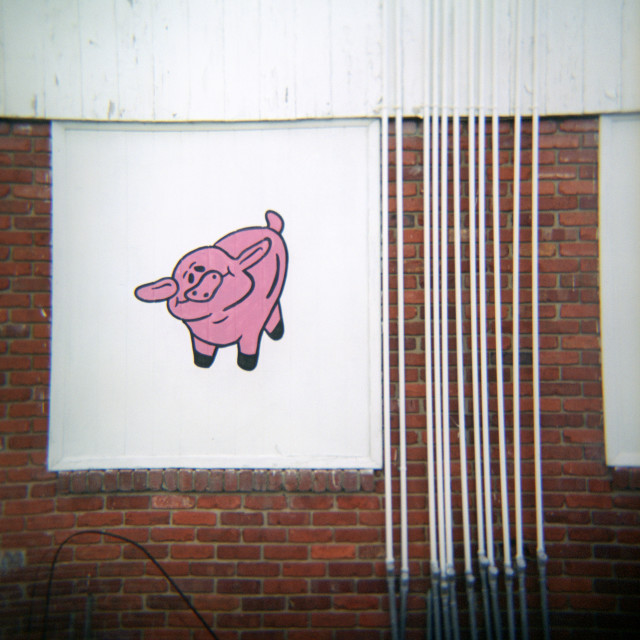 """Pig on wall"" stock image"
