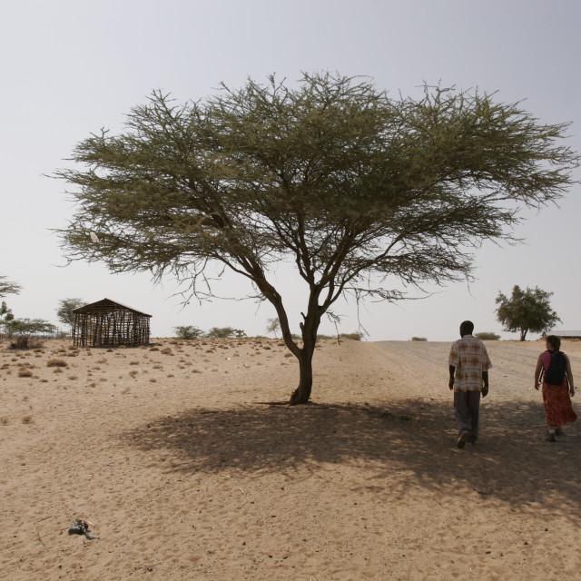 """Two people walking under tree"" stock image"