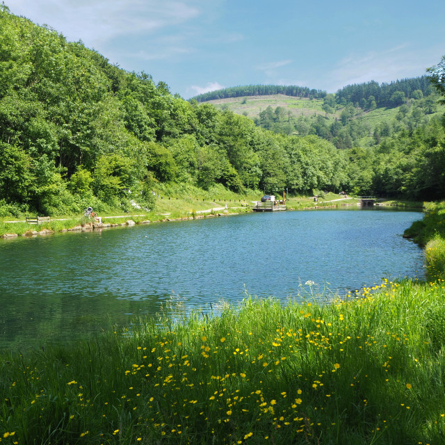 """""""Cwmcarn Forest"""" stock image"""