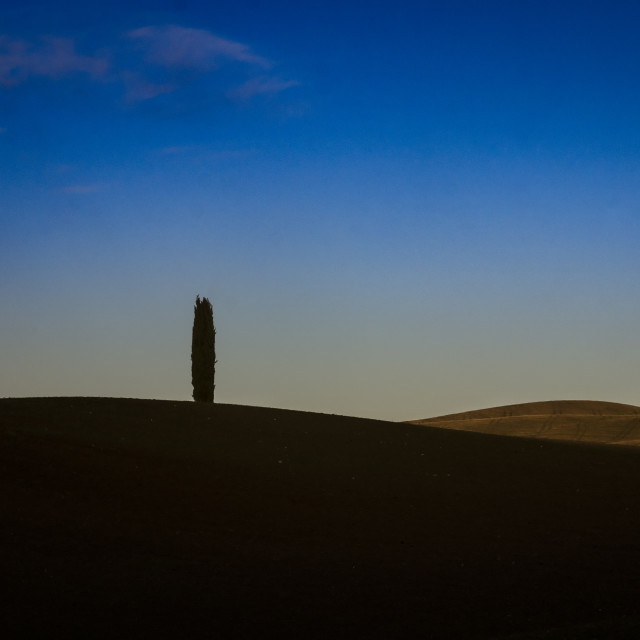 """""""The lonely cypress"""" stock image"""