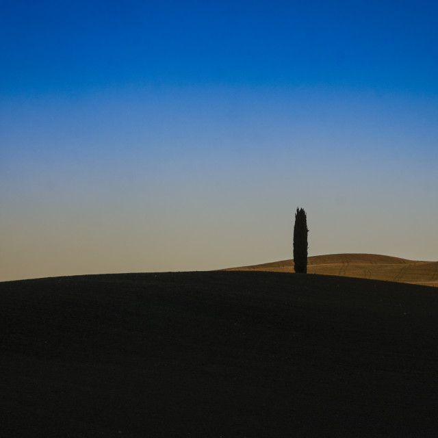 """""""The lonely cypress 2"""" stock image"""
