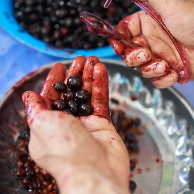 """Man pitting wild cherries"" stock image"