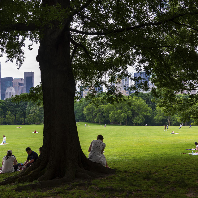 """New York City, USA - June 6, 2010: People enjoying a sunny day at the Central Park with the New York skyline in the background, in the city of New York, USA."" stock image"
