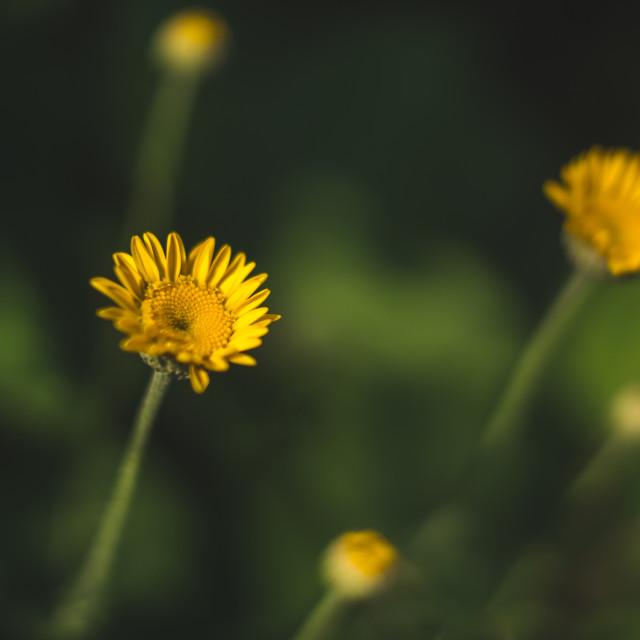 """""""Yellow mood"""" stock image"""