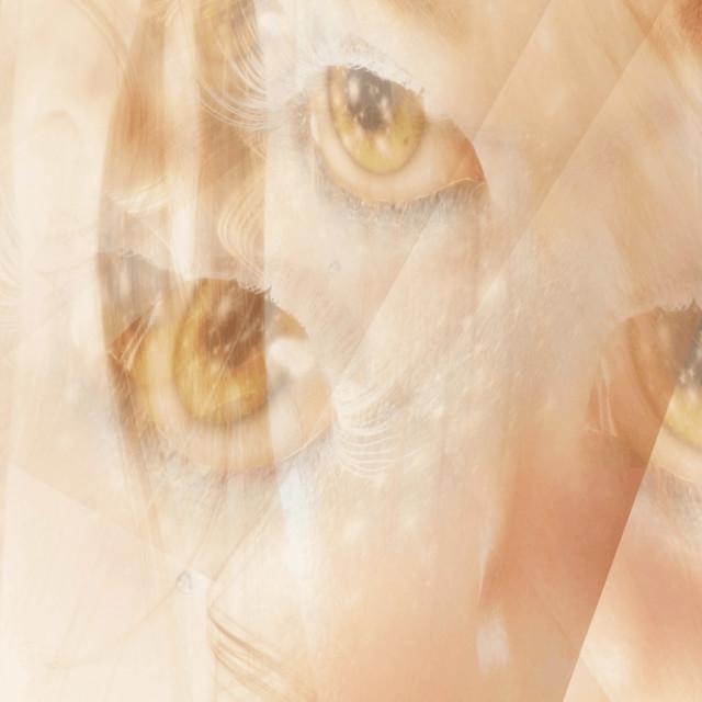 """Digital 3d Illustration of Fairy Eyes"" stock image"
