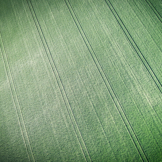 """Aerial view of green field of grain"" stock image"