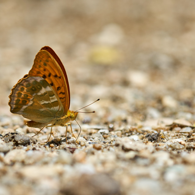 """Butterfly on the ground, macro shot"" stock image"