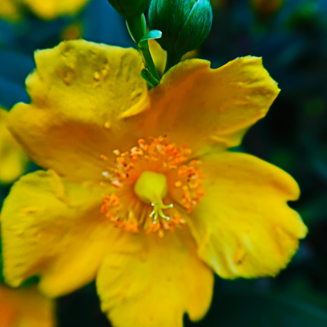 """Yellow flower"" stock image"