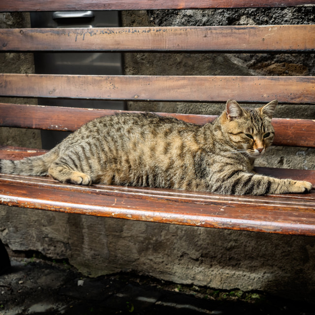 """Cat resting on a bench in Orvieto, Umbria"" stock image"